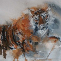 Tiger. Ink and wash on paper. Private collection.