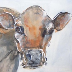 "Jersey cow. Ink and wash on paper. 14 X 18 inches in mount. <a href=""https://www.fiknox.com//contact/"" target=""_self"">For sale - £35</a>"