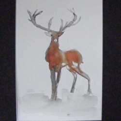 Stag. Ink and wash on paper. Private collection.